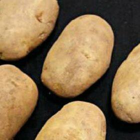 Potato Sharpes Express
