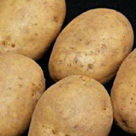 Potato Maris Peer